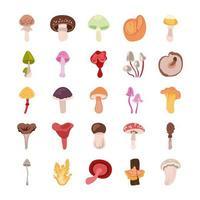 conjunto de ícones de fungo e cogumelo vetor