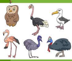 desenhos animados aves espécies animais personagens definido vetor