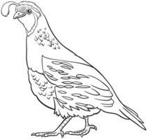 desenho animado codorna pássaro em quadrinhos personagem animal para colorir página vetor