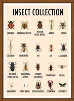 conjunto de coleção de insetos em moldura de madeira vetor