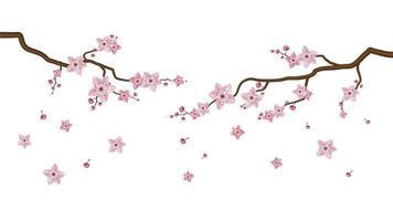 flores em flor de sakura isoladas no fundo branco vetor