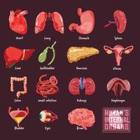 coleção de órgãos internos humanos vetor