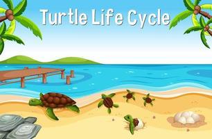 muitas tartarugas na praia com a fonte do ciclo de vida das tartarugas vetor