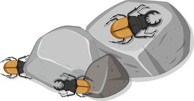 vista superior de muitos besouros veados em pedras vetor