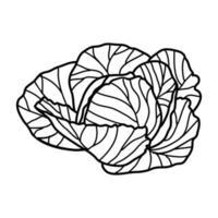 ícone tropical de repolho. doodle desenhado à mão ou estilo de contorno