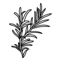 ícone de alecrim. doodle desenhado à mão ou estilo de contorno vetor