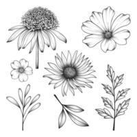 mão desenhada selvagem e ervas flores e folhas ilustração isolada no fundo branco. vetor