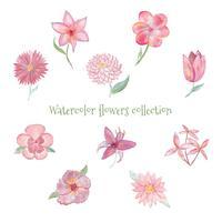 Coleção de flores em aquarela vetor