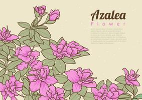 Flores de azálea vetor