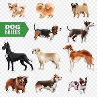 conjunto transparente de raças de cães