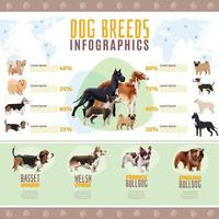 infográficos de raças de cães vetor