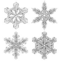 conjunto realista de floco de neve em preto e branco vetor