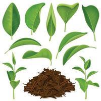conjunto de folhas de chá realista