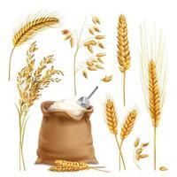 trigo cevada aveia arroz cereais realistas vetor