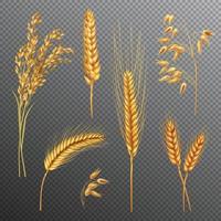 trigo cevada aveia arroz cereais realista transparente vetor