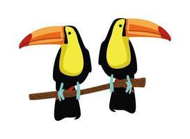 tucanos selvagens pássaros exóticos animais vetor