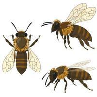 abelha em diferentes poses. vetor