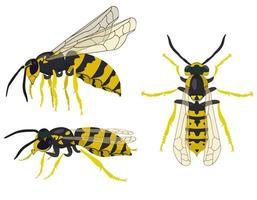 vespa em diferentes poses. vetor