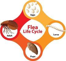 diagrama do ciclo de vida da pulga vetor