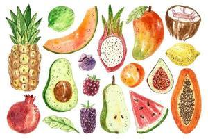 conjunto aquarela de frutas tropicais vetor
