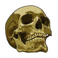 anatomia arte vetorial realista de crânio vetor