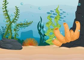 fundo subaquático com algas e recifes de coral