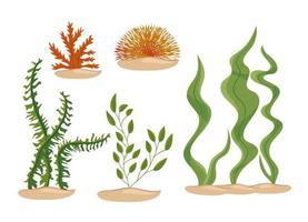 conjunto de ícones de algas marinhas vetor