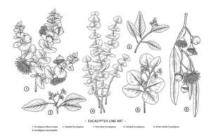 conjunto de ilustrações botânicas desenhadas à mão de galho de eucalipto vetor