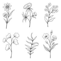 coleção de ervas e flores silvestres e folhas isoladas no fundo branco.