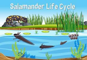 cena com ciclo de vida da salamandra vetor