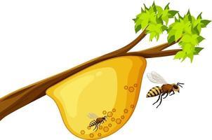 favo de mel em galho de árvore vetor
