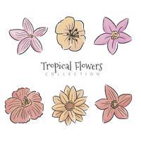 Coleção de conjunto de flores tropicais vetor