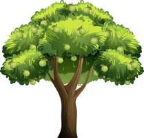 árvore frutífera de goiaba em estilo cartoon, isolada no fundo branco vetor
