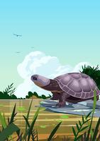 Tartarugas do pântano vetor
