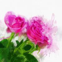 Rosas em aquarela vetor