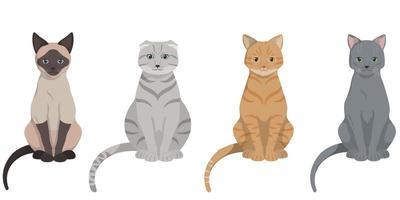 conjunto de gatos diferentes sentados.