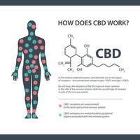 como funciona o cbd, banner de informação branco com fórmula química de canabidiol e receptores de endocanabinóides no corpo humano.