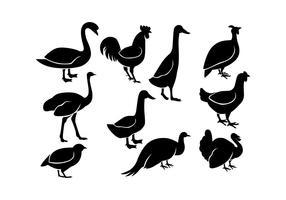 Vetor De ícone De Linha De Aves De Capoeira