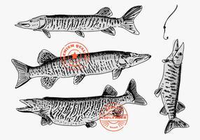 Muskie peixe mão desenhada marca Logo Vector Illustration