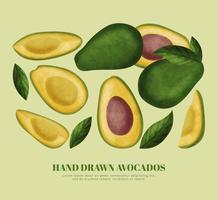 Abacates de mão desenhada de vetor
