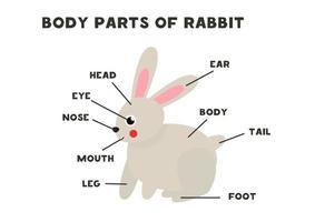 partes do corpo do coelho. esquema para crianças. vetor