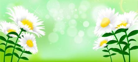 lindo fundo de flor de margarida vetor