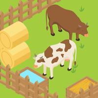 Vetor isométrico de gado