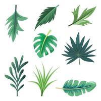 coleção de belas folhas tropicais isoladas no fundo branco. vetor