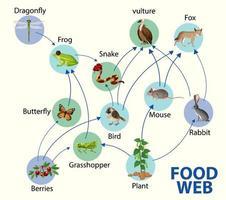 conceito de diagrama de cadeia alimentar vetor