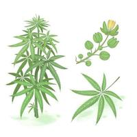 aquarela de vetor de cannabis
