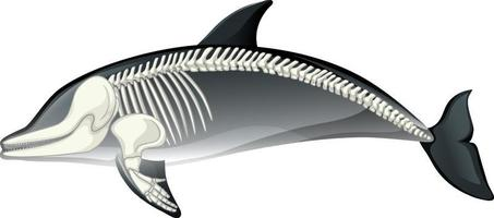 esqueleto anatomia de golfinho isolado no fundo branco vetor