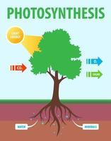 esquema de fotossíntese de uma árvore. conversão de dióxido de carbono em oxigênio. ilustração de ensino de vetor plana.