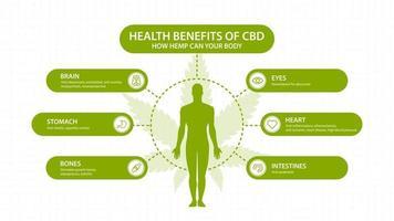 Benefícios do cbd de cânhamo para o seu corpo, pôster branco com imagem e silhueta do corpo humano. benefícios para a saúde do canabidiol cbd de cannabis, cânhamo, maconha, efeito no corpo vetor