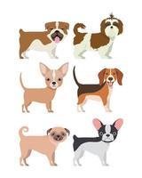 pacote de grupo de raças de cães